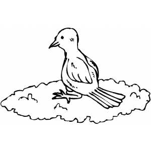 Bird On Cloud coloring page